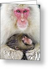 Snow Monkey Love Greeting Card