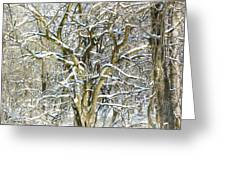 Snow On A Hedge Tree Greeting Card
