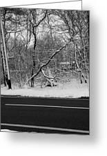 Snow On Fallen Tree Greeting Card