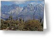 Snow On Four Peaks Arizona No Snow On Saguaros Greeting Card