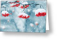 Snow On Red Berries Greeting Card