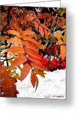 Snow On Scarlet Magick Greeting Card