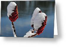 Snow On Sumach Greeting Card