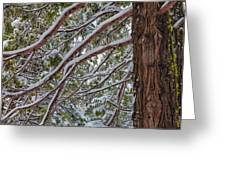 Snow On The Branches Greeting Card
