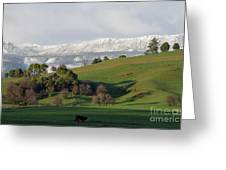 Snow On The Great Western Tiers, Tasmania Greeting Card