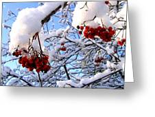 Snow On The Mountain Ash Greeting Card