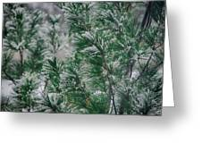 Snow On The Pine Greeting Card