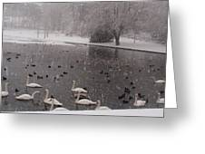 Snow Over Swan Lake Greeting Card