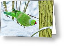 Snow Parrot Greeting Card