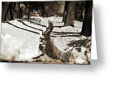 Snow Paths And Winter Shadows Greeting Card