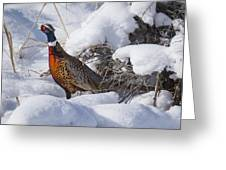 Snow Rooster Greeting Card