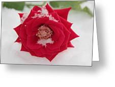 Snow Rose Greeting Card