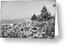 Snow Settles On The Lake Shore Greeting Card