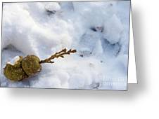 Snow Sprouts Greeting Card