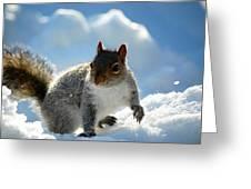 Snow Squirrel Greeting Card