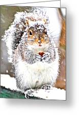 Snow Squirrel  Greeting Card