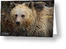 Snow The Grizzly Greeting Card