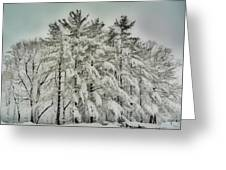 Snow Trees  Hdr Greeting Card