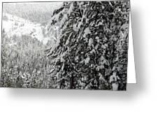 Snow, Trees, Yellowstone Greeting Card