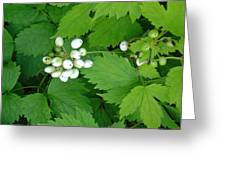 Snow White Berries Greeting Card