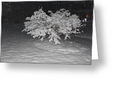 Snow White Tree Greeting Card