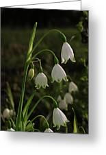 Snowbells Greeting Card