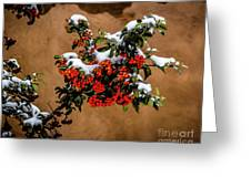 Snowberries Greeting Card