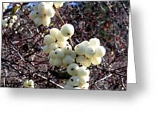Snowberries Greeting Card