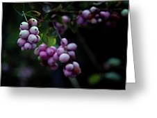Snowberry 5191 H_2 Greeting Card