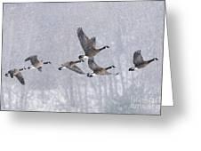 Snowbound Arrivals Greeting Card