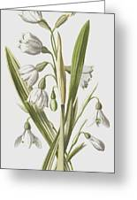 Snowdrop And Snowflake Greeting Card