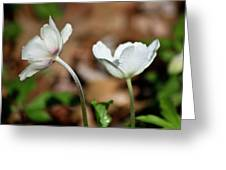 Snowdrop Anemones Greeting Card