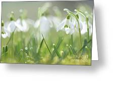 Snowdrop Greeting Card