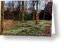 Snowdrop Woods 2 Greeting Card