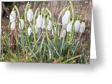 Snowdrops In The Garden Of Spring Rain 1 Greeting Card
