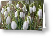 Snowdrops In The Garden Of Spring Rain 5 Greeting Card