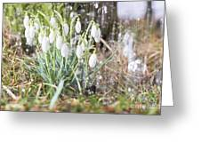 Snowdrops In The Garden Of Spring Rain 7 Greeting Card