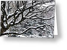 Snowfall And Tree Greeting Card