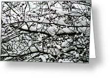 Snowfall On Branches Greeting Card