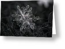 Snowflake Photo - January 18 2013 Grey Colors Greeting Card