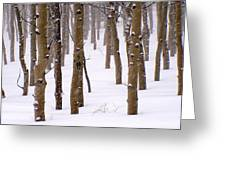 Snowy Aspen Greeting Card