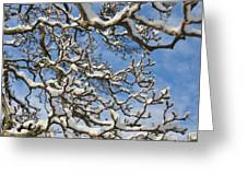 Snowy Branches Greeting Card