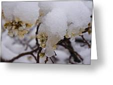 Snowy Buds Greeting Card