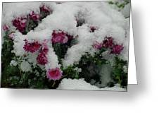 Snowy Chrysanthemums Greeting Card