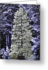 Snowy Day Pine Tree Greeting Card