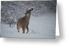 Snowy Doe Greeting Card