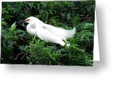 Snowy Egret 12 Greeting Card
