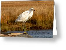 Snowy Egret 3 Greeting Card