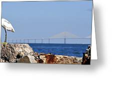 Snowy Egret And Sunshine Skyway Bridge Greeting Card