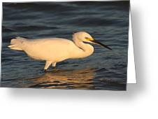Snowy Egret By Sunset Greeting Card